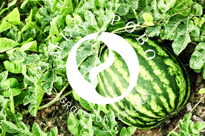 meri-pobo-agropecuaria-6