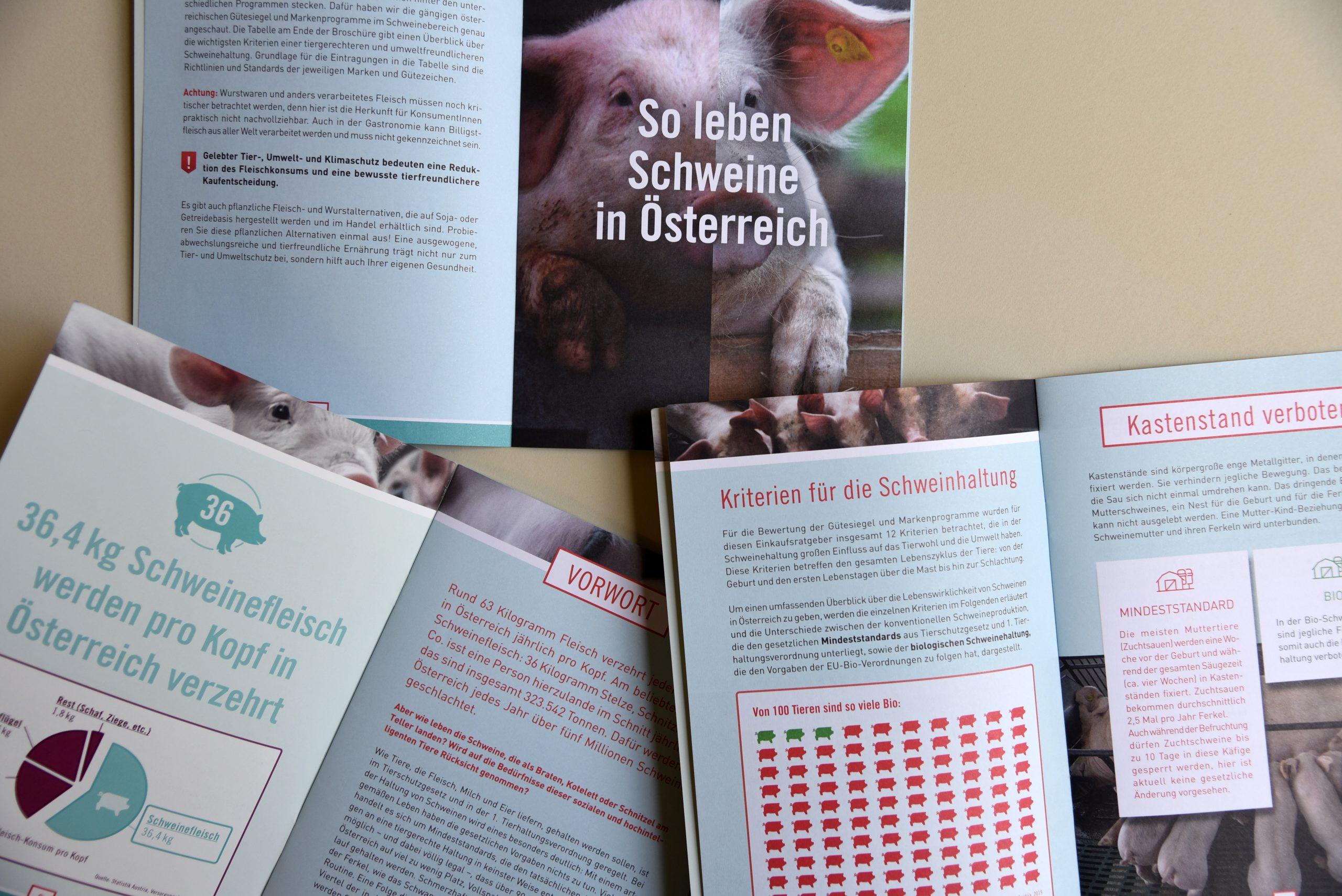 animal_awareness_branding24